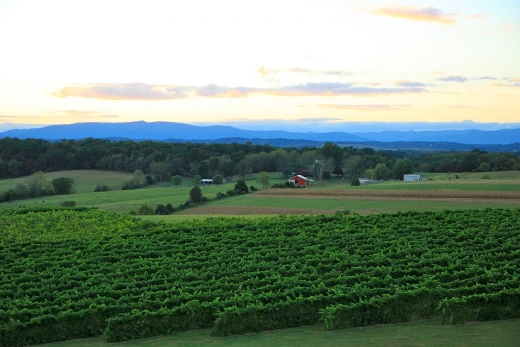 Barren Ridge Vineyard