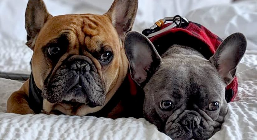 """Dog-Friendly Parks, Patios, and Places to Stay: Staunton """"Pup-cations"""""""