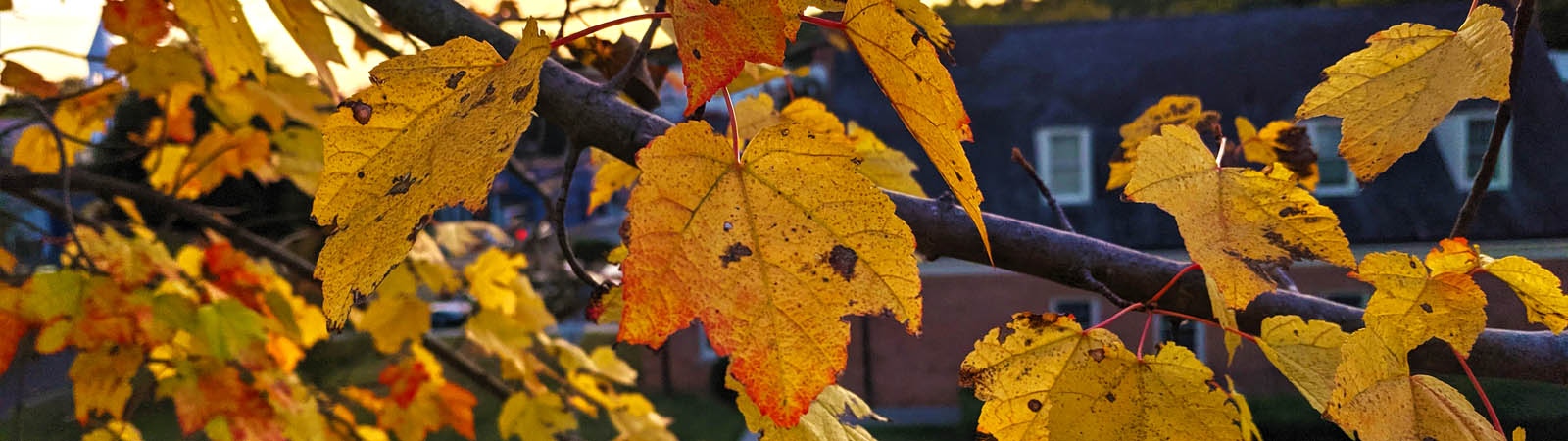 Staunton's Fall Foliage Report:  Weekend of October 18-20
