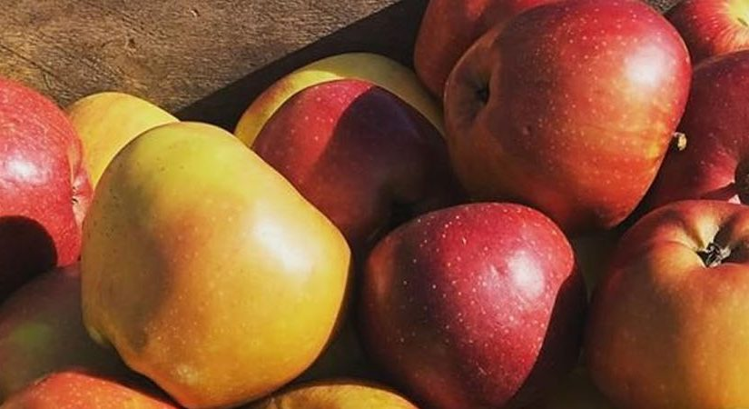 Pick Your Own Fruit and Produce at 8 Staunton-Area Farms