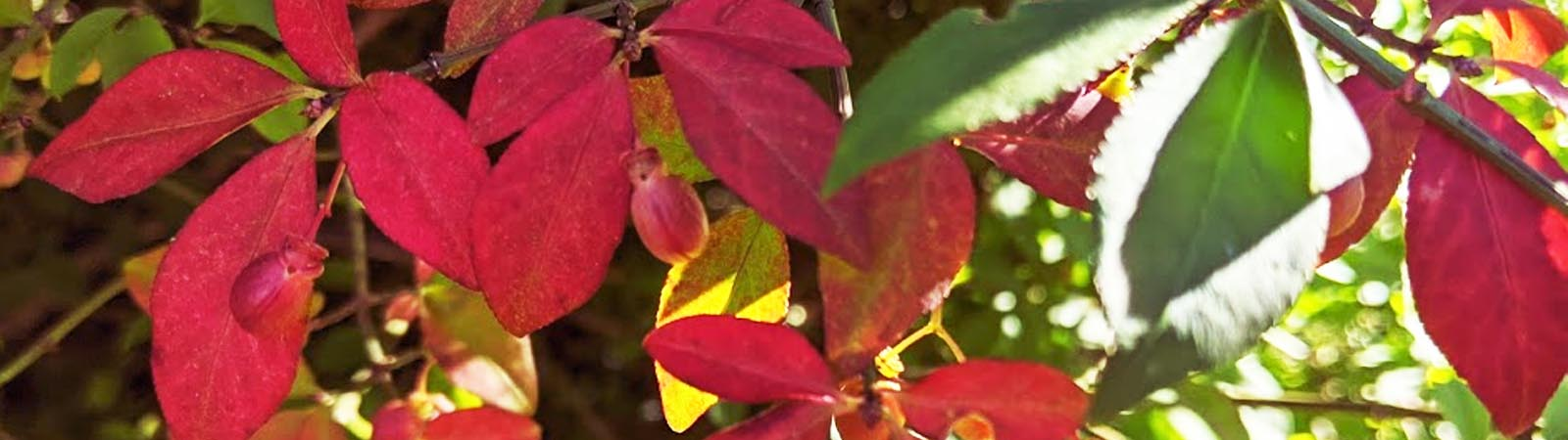 Staunton's Fall Foliage Report: Weekend October 8-10, 2021